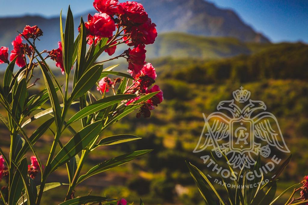 Гора Афон, природа