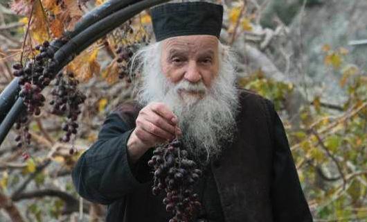 Монах собирает виноград