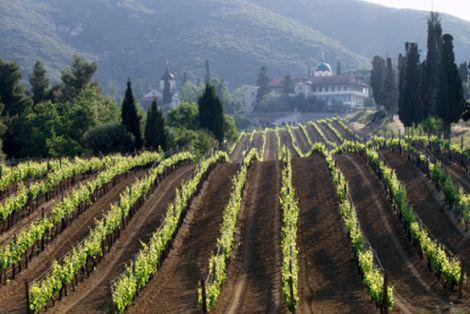 Виноградники Афона